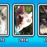 Выбираем кошку для Minecraft!
